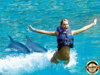Nado con delfines Supreme Experience