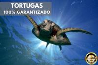 Snorkel con Tortugas y Cenotes