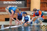 Nado con delfines Trainer For a Day (entrenador por un día)